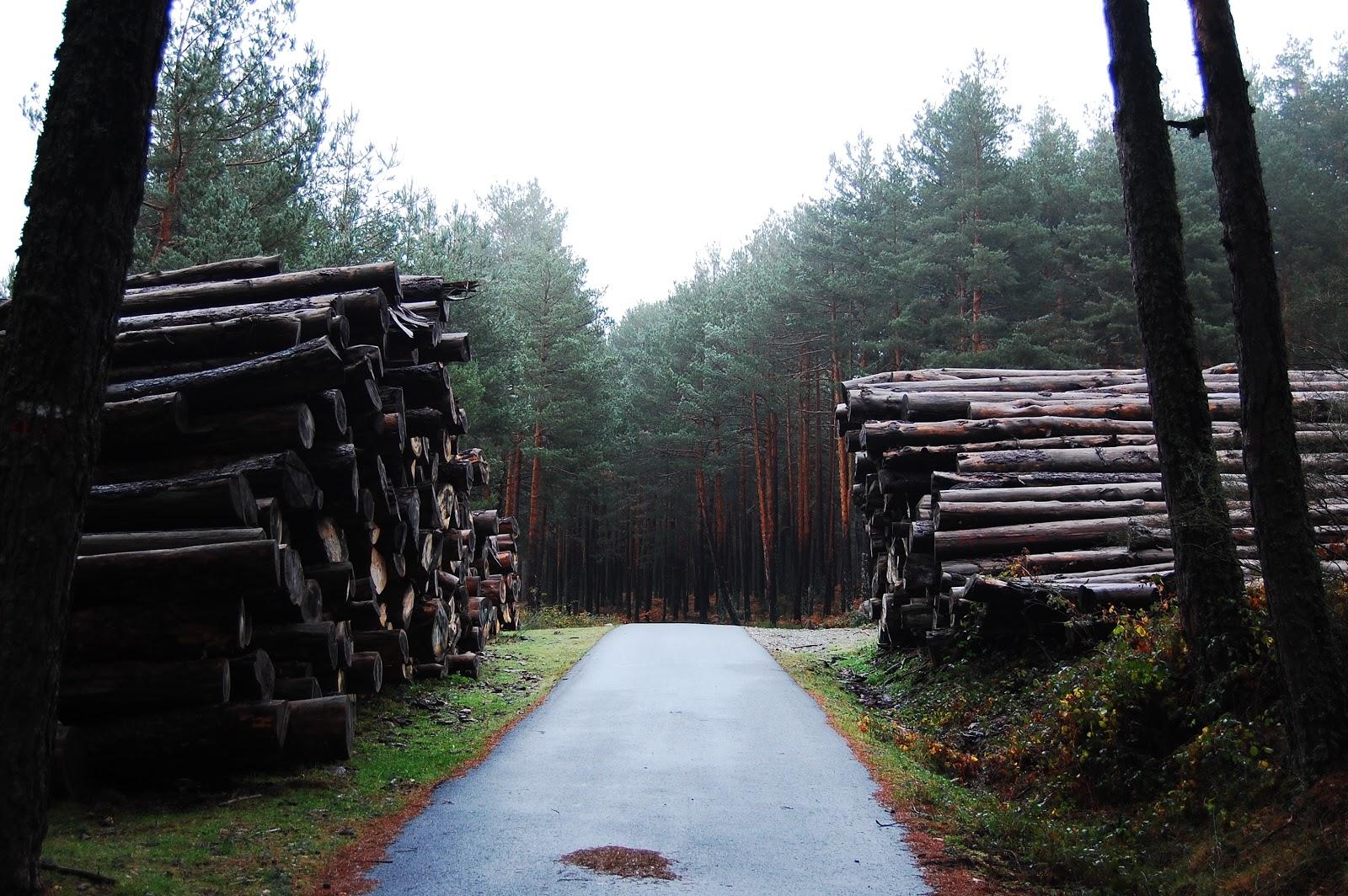 Blog Go Tandem - Amontonamiento de troncos