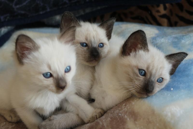 Mitzi's beautiful kittens