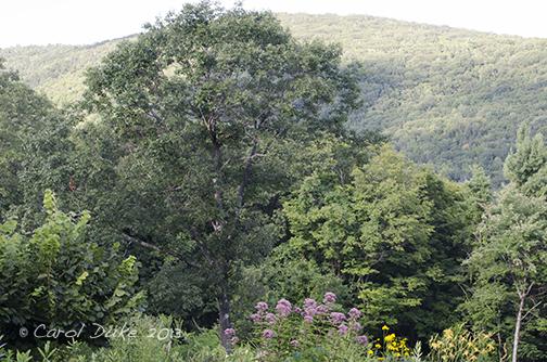 Colores calientes de las mariposas frescas de agosto y de un bestiario de pájaros - retiro de la colina de la colina de la flor