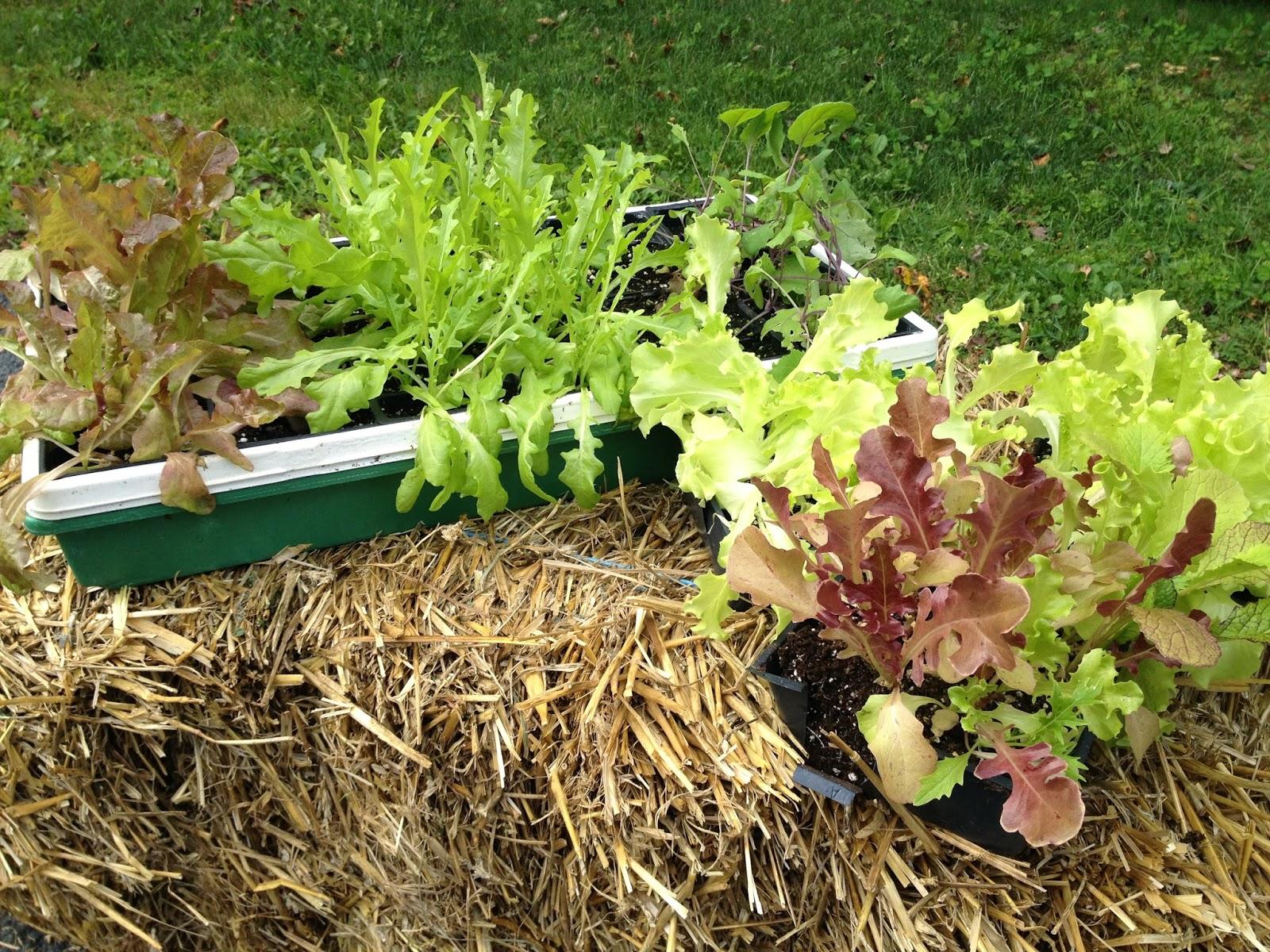 Niki Jabbour The Year Round Veggie Gardener Straw Bale Gardening