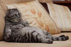 gato-domingo.jpg