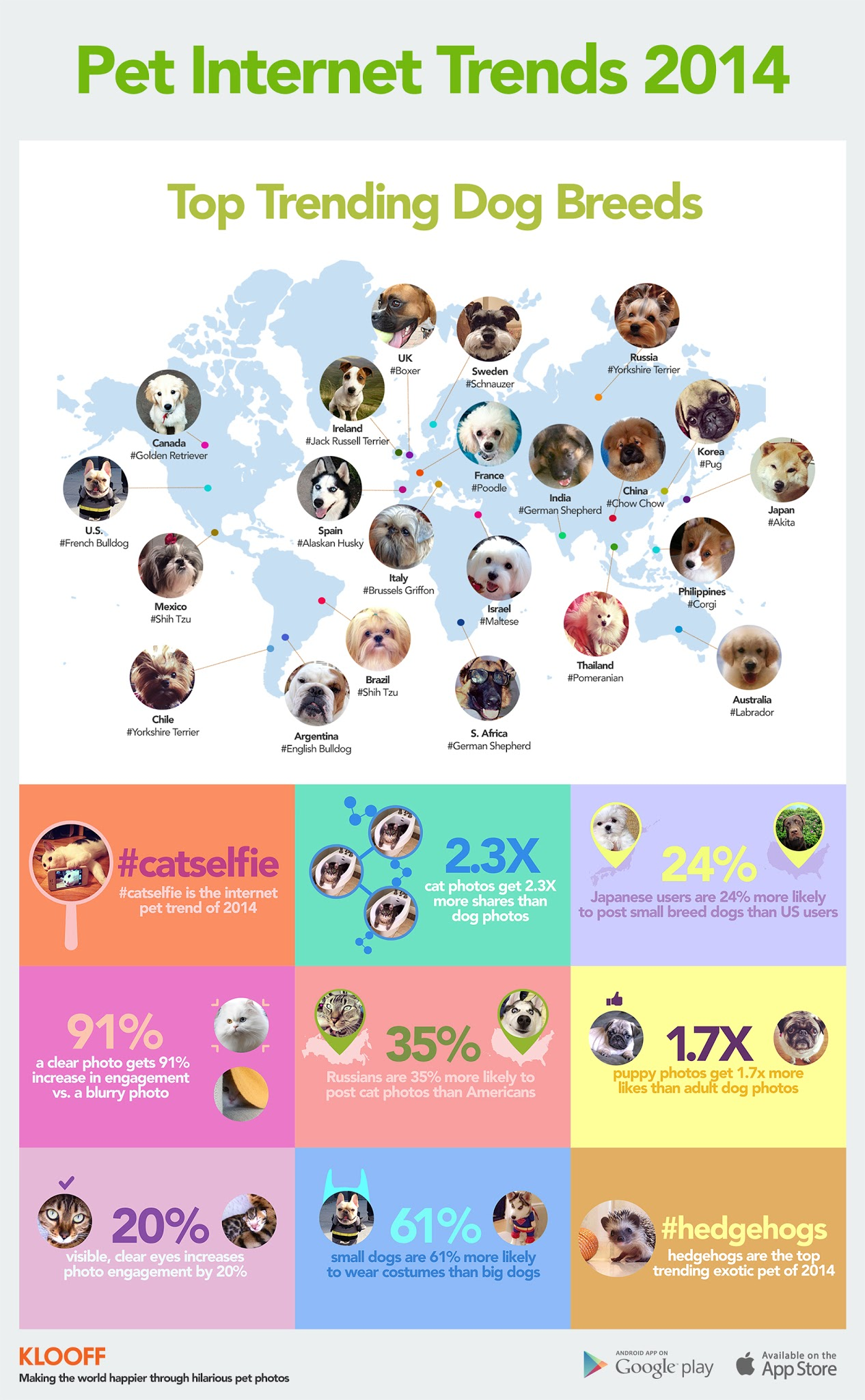 Pet Internet Trends 2014 - #infographic #socialmedia #contentmarketing with pets