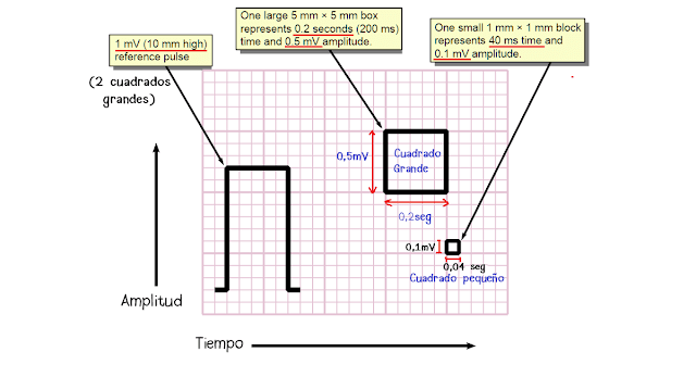Electrocardiograma, papel calibrado