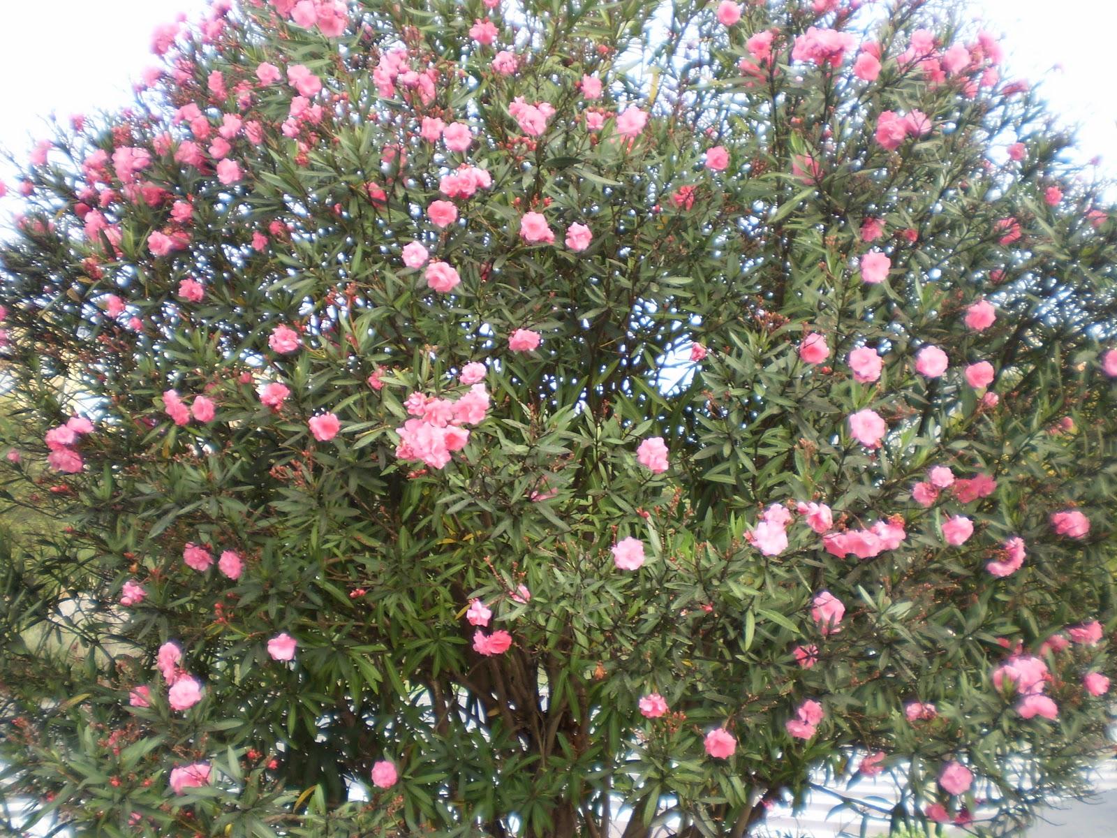 Cita con la vida los 60 me parecen respetables - Laurel de jardin ...