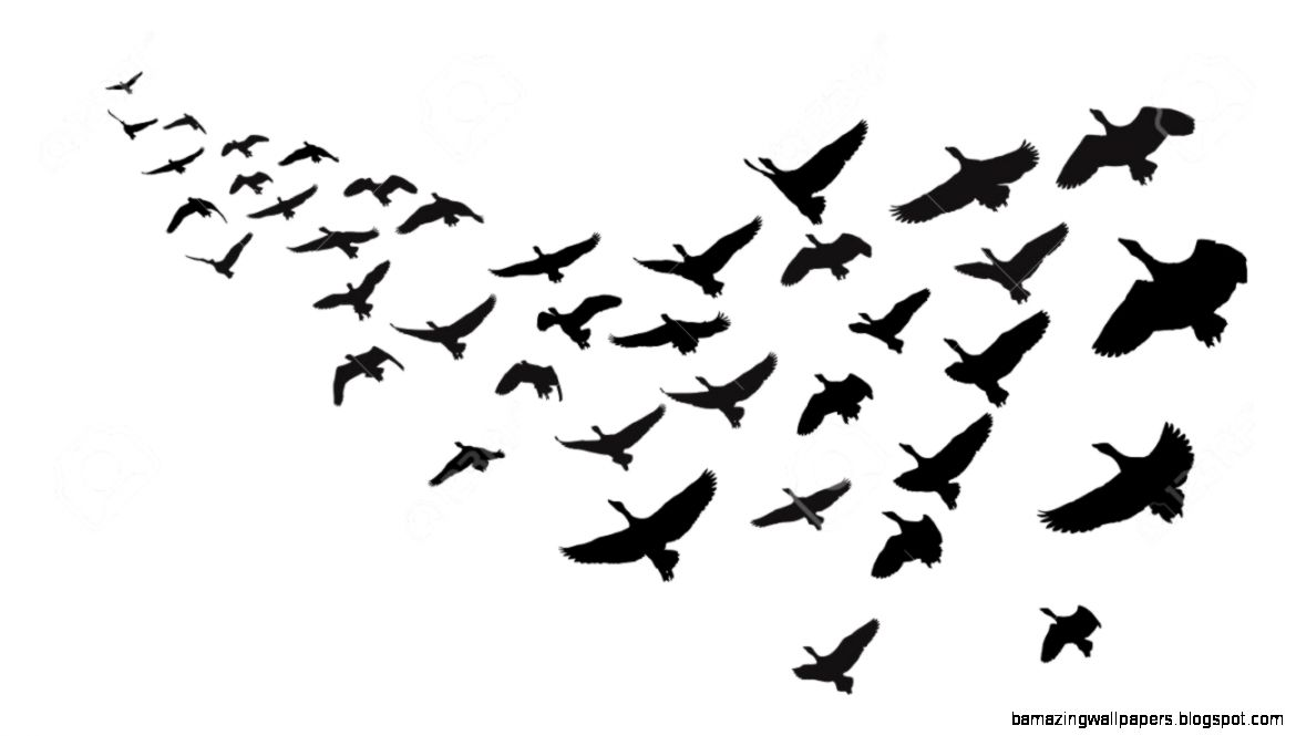 Wild Geese In Flight Royalty Free Cliparts Vectors And Stock