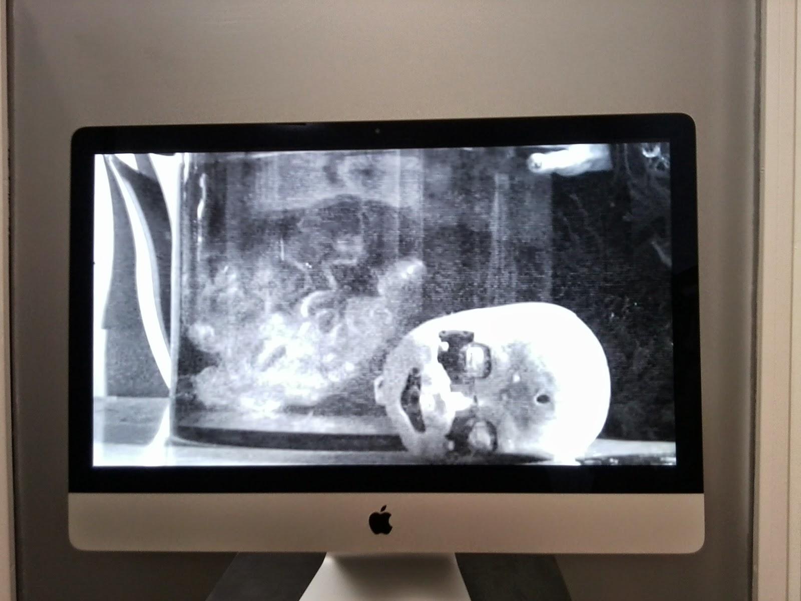 fotografía de autor, sofía santaclara, galería espacio foto, fotografía en blanco y negro, voa-gallery, blog de arte, victim of art, yvonne brochard,