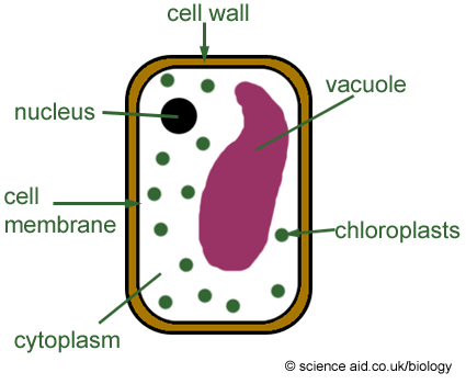 GCSE and AS revision: iGCSE Biology