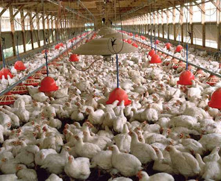 Poultry Business