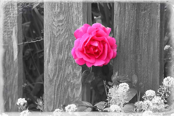 A Bit Of Color In Black White