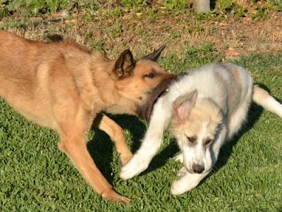 ¡Así que tu perro es reactivo!