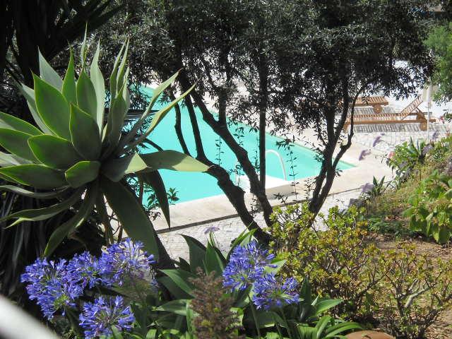 Um jardim para cuidar Poupe água ! escolha plantas resistentes à