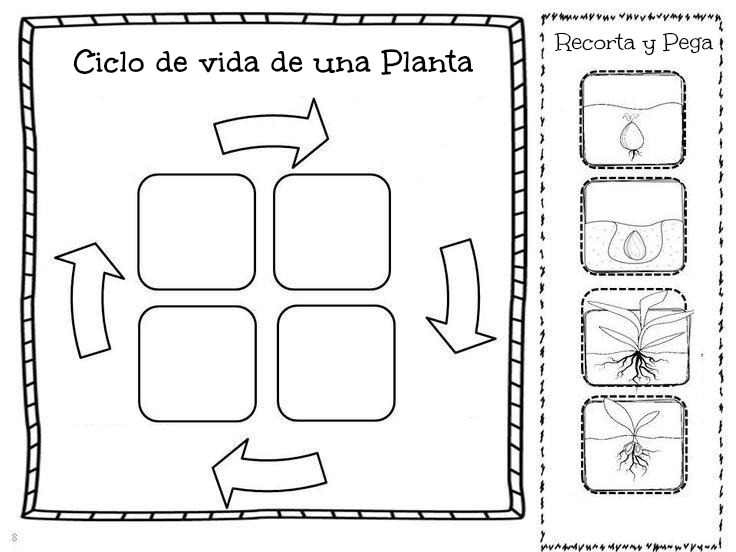 Image Result For Life Cycle Of A Frog Lesson Plan Year