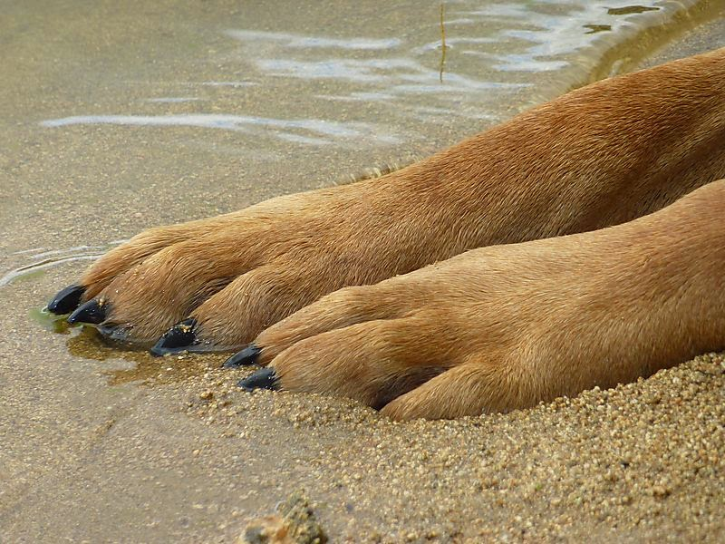 hond drachtig verliest slijm
