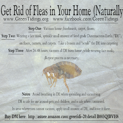 How To Get Rid Of Fleas In The House Green Tidings How To Get Rid Of Fleas In Your Home Naturally