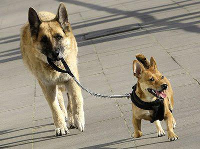 dato sobre perro:
