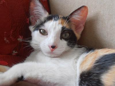 Crush e Tininha - gatinhos para adoção em Santos PC080014