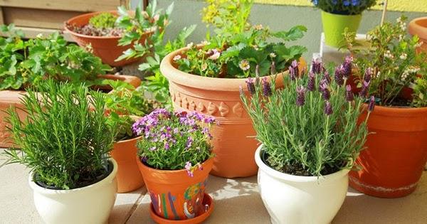 herbe jardinage pour les d butants. Black Bedroom Furniture Sets. Home Design Ideas