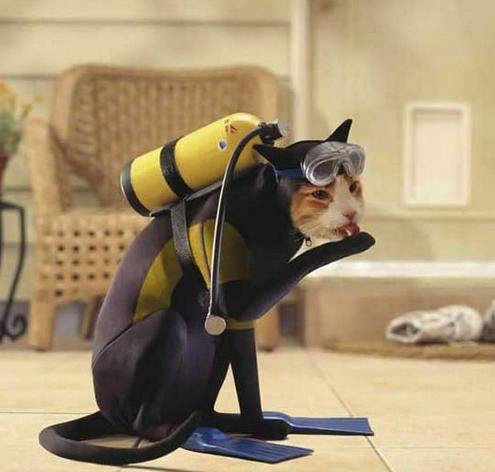 [Image: Scuba-Diver-Cat.png]