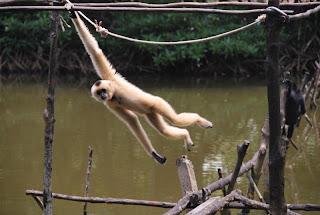 Can Gio – Vam Sat – réserve biosphère 1 journée
