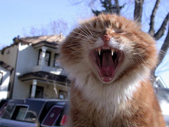 كمآ وعدناكم [الشباب] يصطاد جوجو وقطط نهآآل ==> صور بالقمر الصناعي