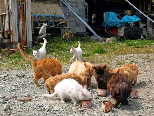 fukushima animals
