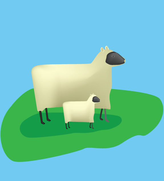 sheep with lamb as vector