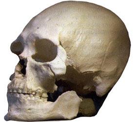 Cro_magnon Skull