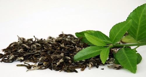 Chá Verde folhas e talos