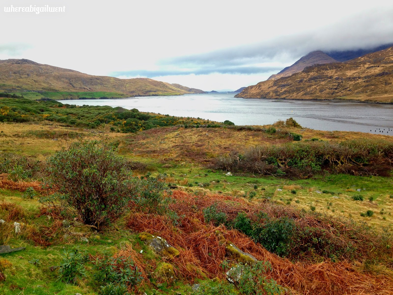 Only Fjord in Ireland