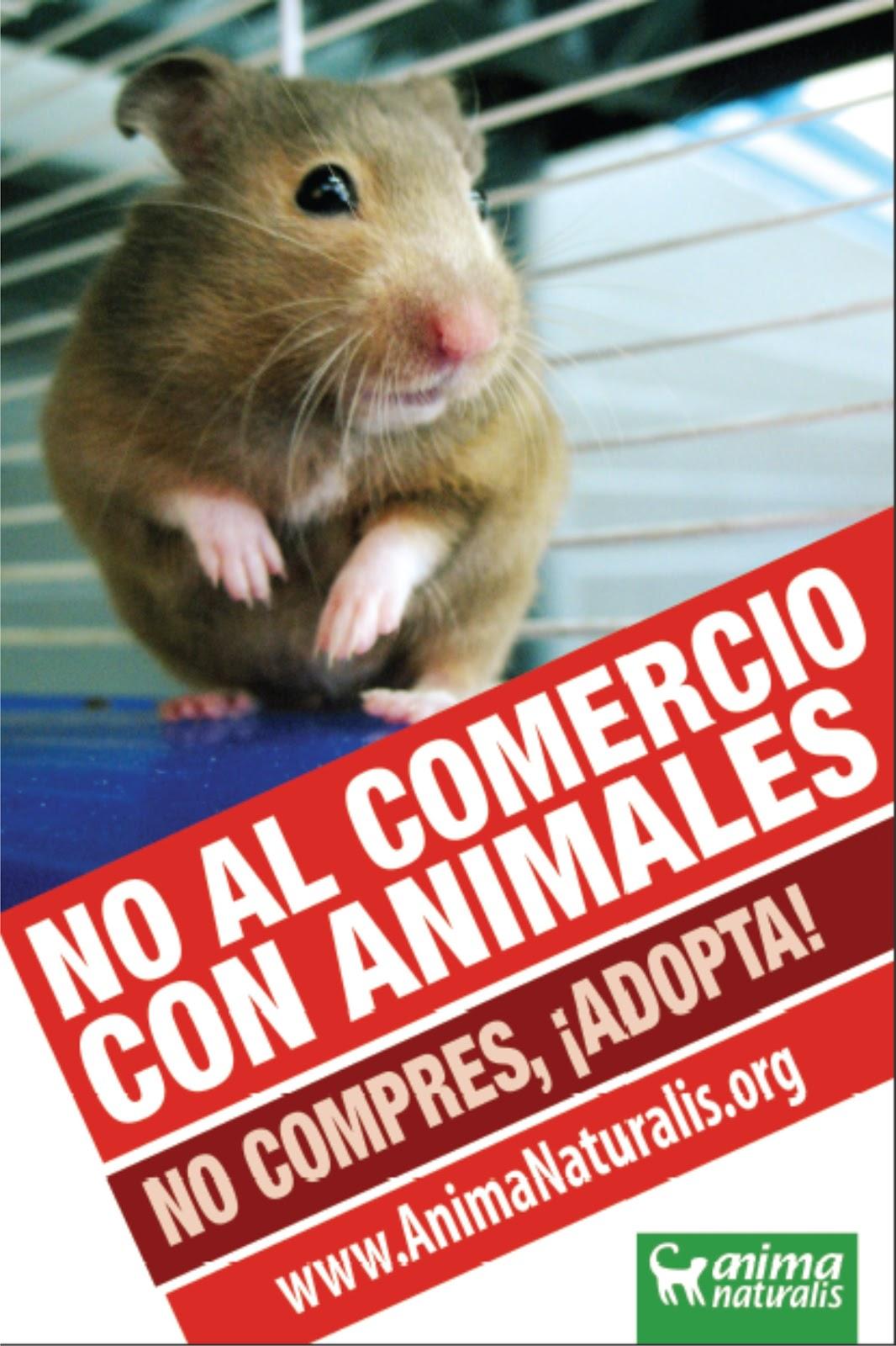 venta hamsters, venta conejos, venta animales... no compres, adopta