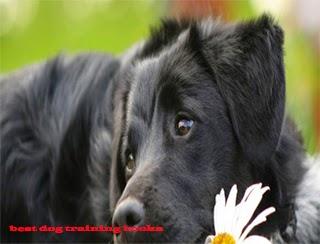 Parvo In Dogs