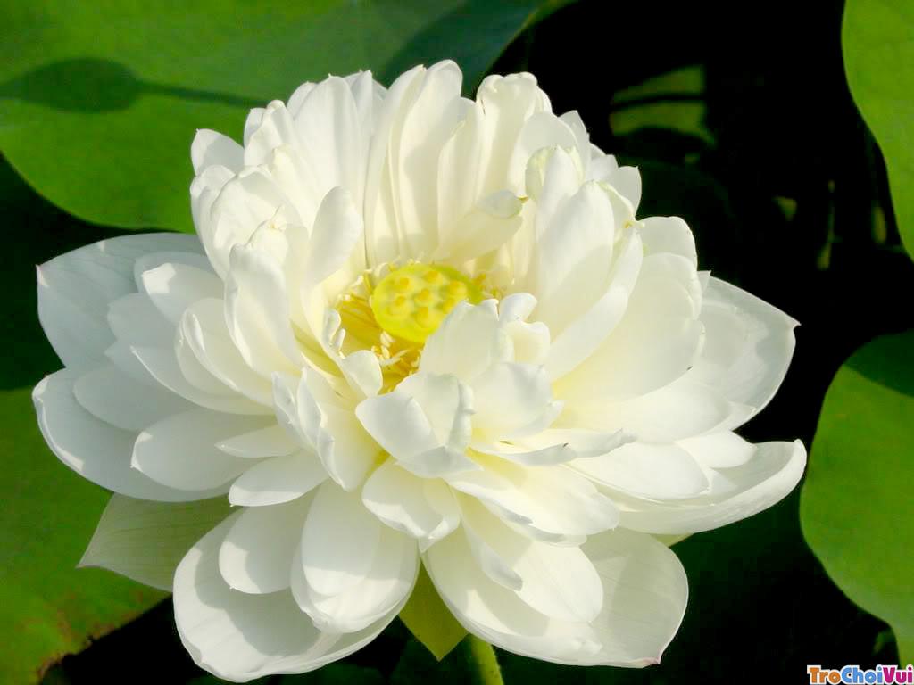 Với cái nhìn tất cả chúng sanh điều là hoa sen, dù còn dưới bùn, sống ở trong nước, vươn tới mặt nước hay đã vượt ra ngoài không khí