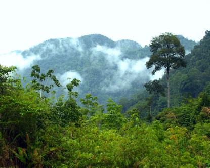 borneo rainforest%252B%252B%252Bwww%252Bdestination360%252Bcom teen fingering herself