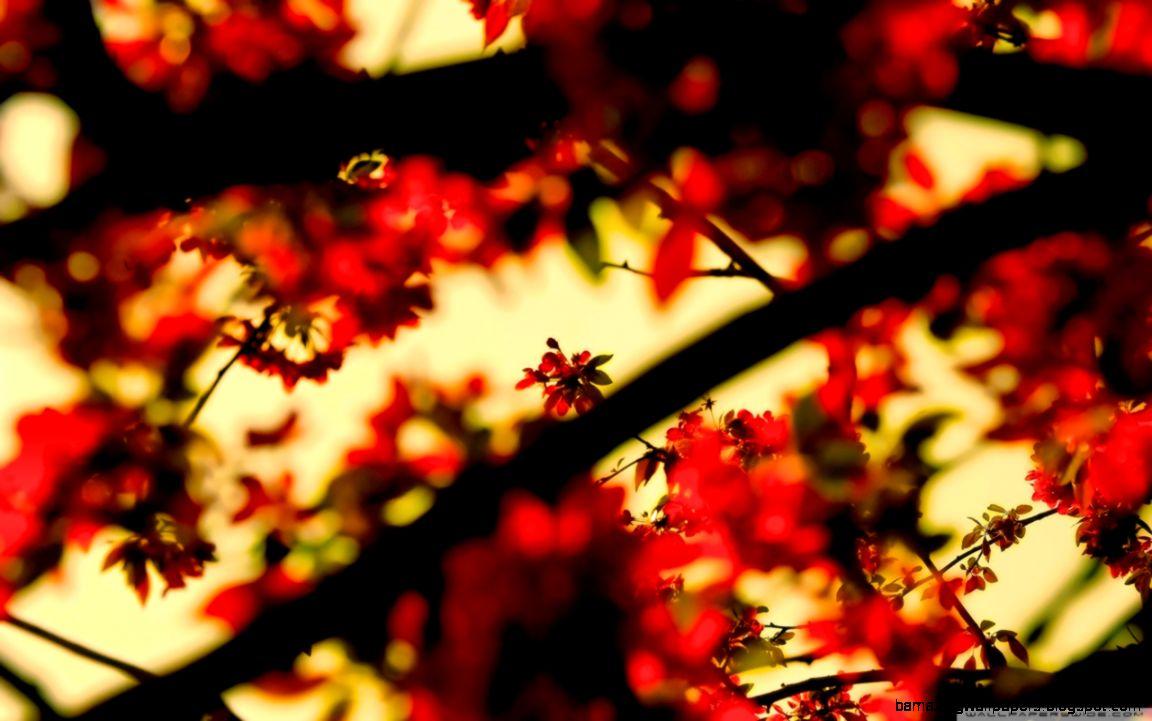 Spring Wallpaper HD desktop wallpaper  Widescreen  High