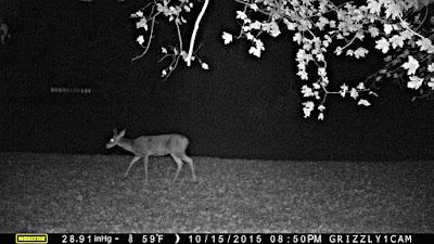UFO Caught Stalking Deer In Kentucky 2015, UFO Sightings