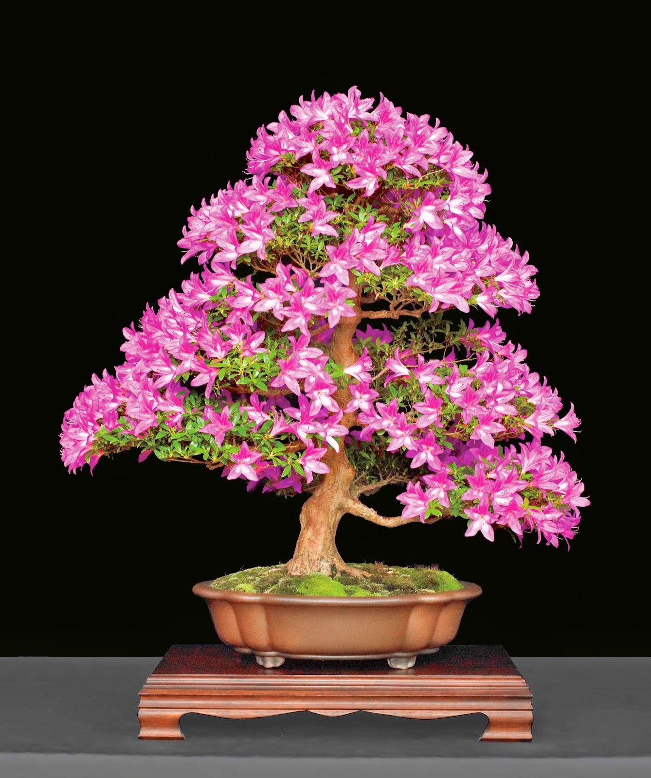 Durham council of garden clubs triangle bonsai society for Unusual bonsai creations