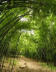 Hidden New Jersey Pandas Rejoice Bamboo Abounds In New