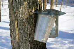 'Maple Sugaring Day' returns to Tahquamenon Falls State Park March 23