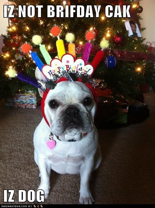funny happy birthday dog cake - photo #23