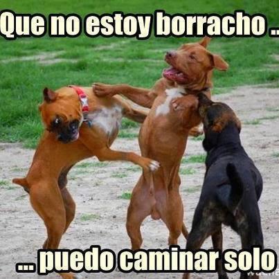 Ahora Puedes Descargar Imagenes De Pitbull Perros