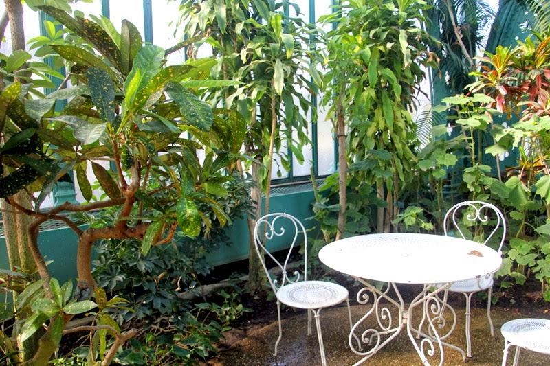 Serre Auteuil végétal terrarium paris palmiers cactus