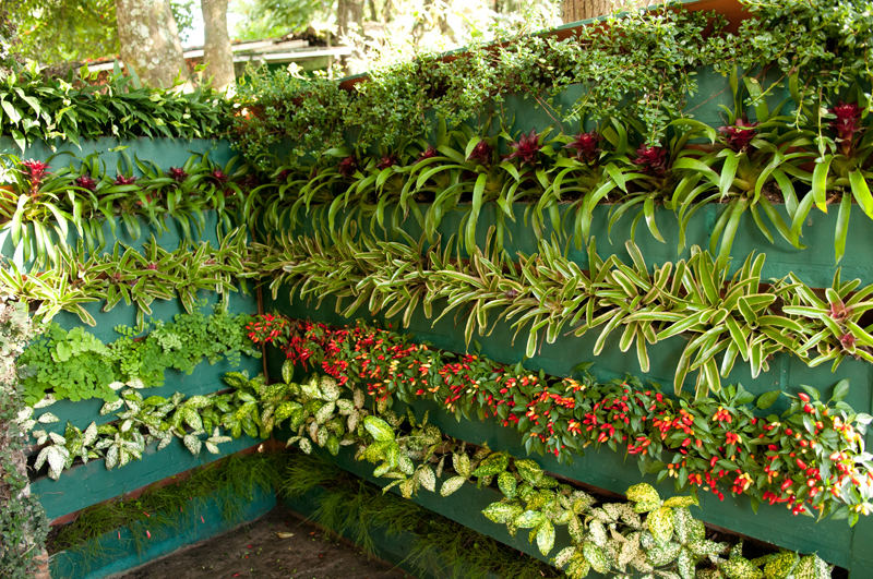 Suculentas e Cia: Jardim Vertical