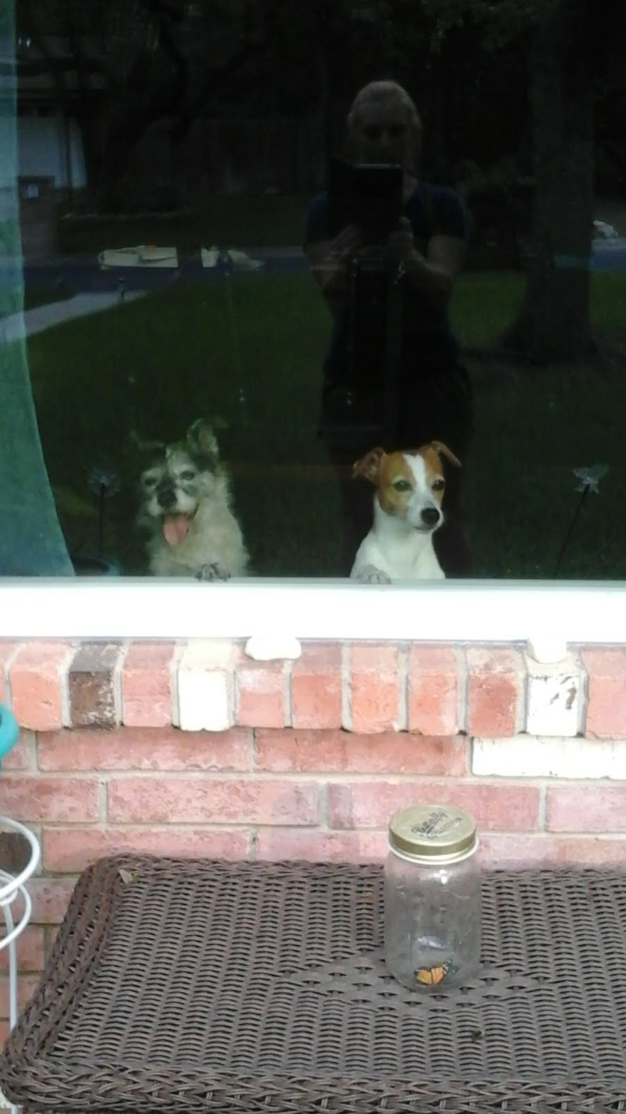 How much is that doggy in the window?