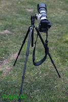 Gitzo GT1544T tripod fully extended with long telephoto attached