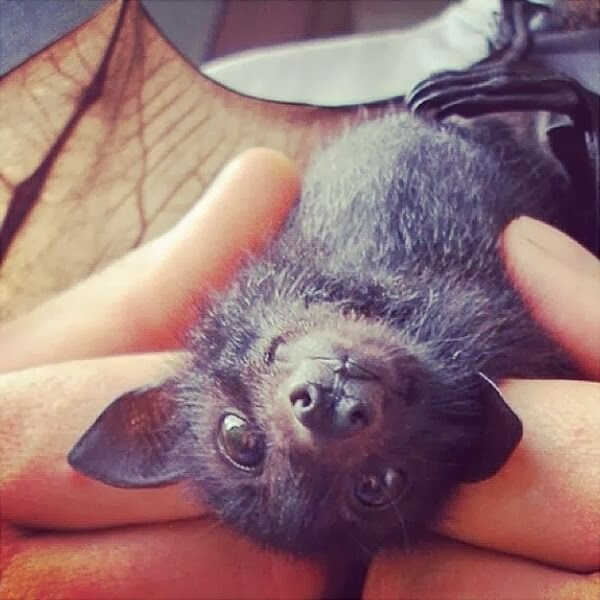 Funny animals of the week - 10 January 2014 (35 pics), cute baby bat