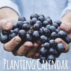 Start Gardening!