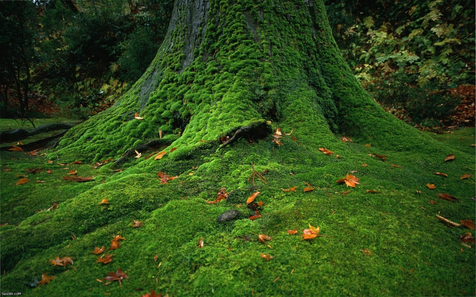 Lawn and landscape tips from the turf doctor don t let moss grow