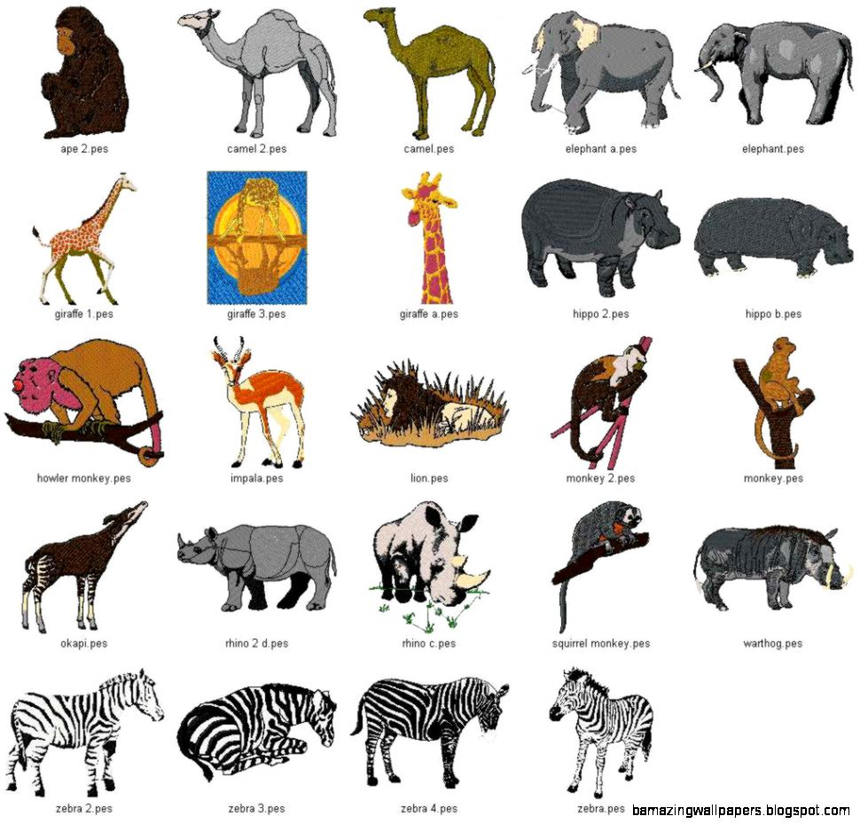 African Animals Names And Pictures - The Funniest Animal 2017