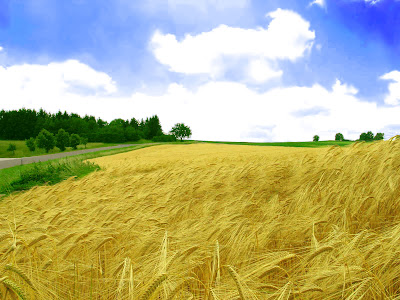 HD Crop Field Wallpapers