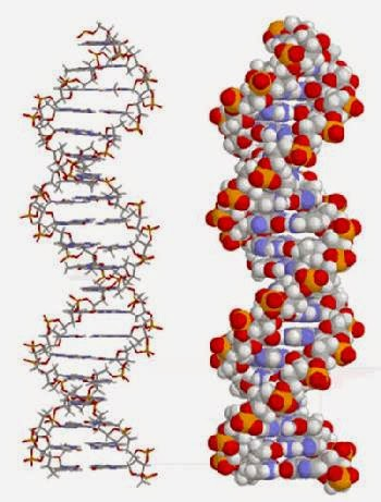 DNA, The Design Code That God Created In All Of Our Cells